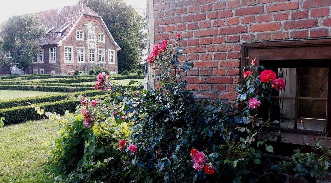 Rosen an der Orangerie im Garten des Haus Rüschhaus. Foto: Susanne Rupprecht